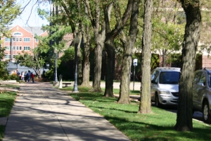 Trees on Drury campus
