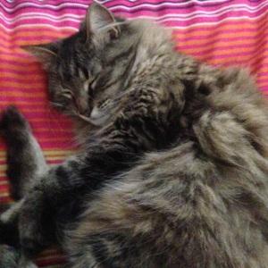 Jenksie cat nap